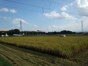 富山のコシヒカリ稲刈り風景